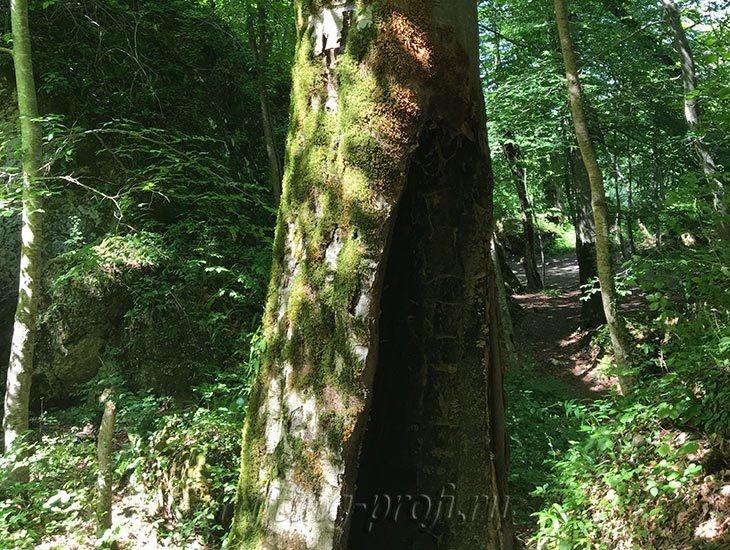 Водопады Ручья Руфабго 36