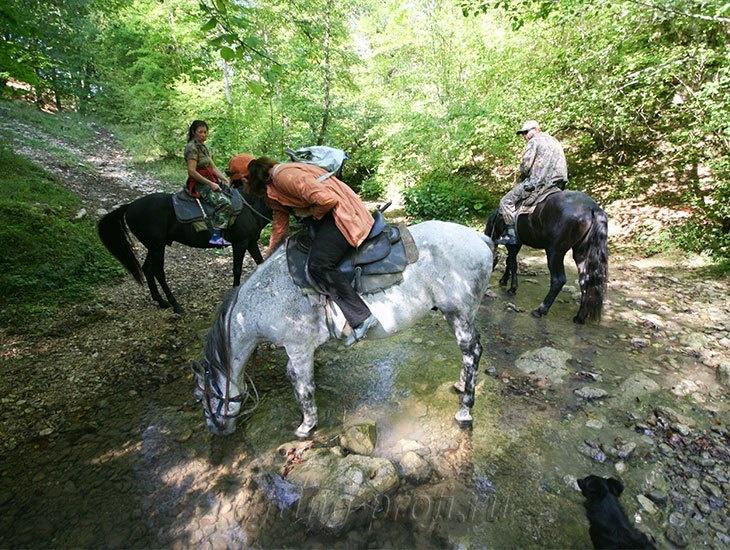 Конные прогулки в горах Адыгеи 17